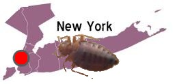 new york bed bugs, bed bugs office, bedbugs work, bedbug.com, bedbug blog