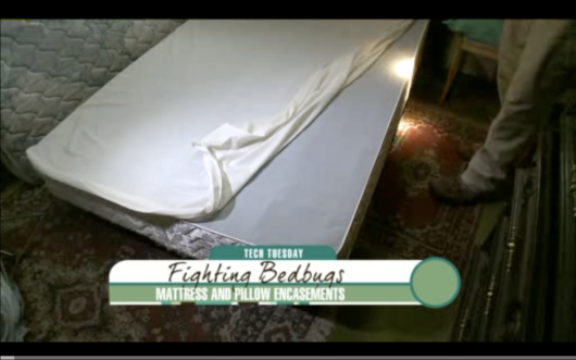 mattress bed bugs, bed bug video, bed bug movie, bed bug covers, mattress cover, bed bugs, bedbugs, bed bug bedbug