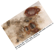 Bed bugs and the law in new york city bedbugcom the for Bed bug laws